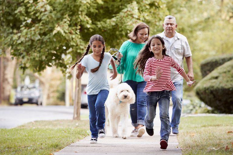 Pragas urbanas: como podem afetar o bem-estar da sua família e o que fazer para evitar