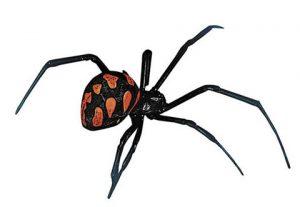 Pragas urbanas: como evitar aranhas