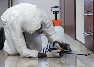 Os riscos de pragas não diminui no inverno: veja como mantê-las longe de sua casa